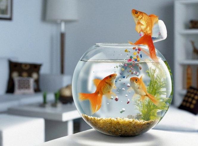 Bể cá thủy sinh đặt bàn làm việc