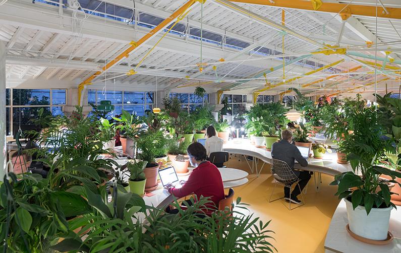 Trang trí văn phòng xanh